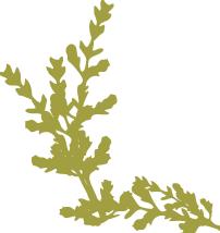 quadrado planta