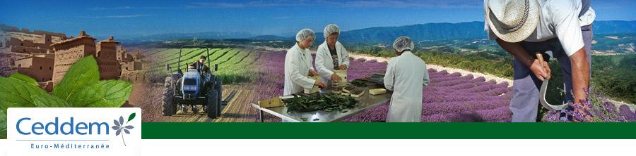 EPAM em Encontro Mediterrânico sobre inovação no sector das plantas aromáticas e medicinais