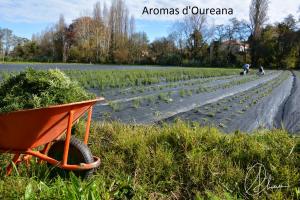 aromas doureana_epam