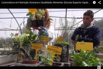 Licenciatura em Nutrição Humana e Qualidade Alimentar