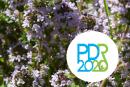 PDR2020 apoia desenvolvimento do CCPAM