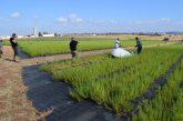 Investigação sobre inovação social no desenvolvimento rural: EPAM caso de estudo